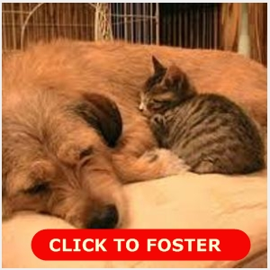 Help save a life by fostering a pet. Click to find out how!